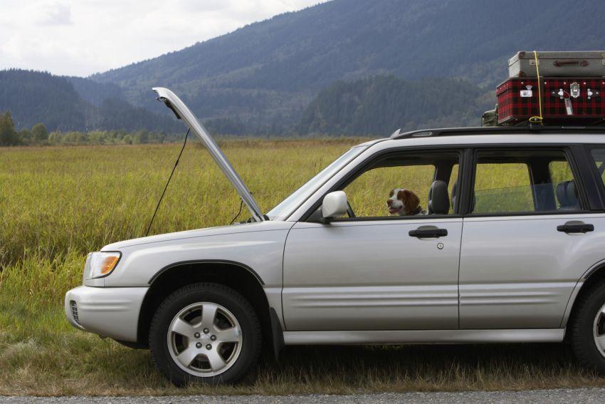 Auto und Hund