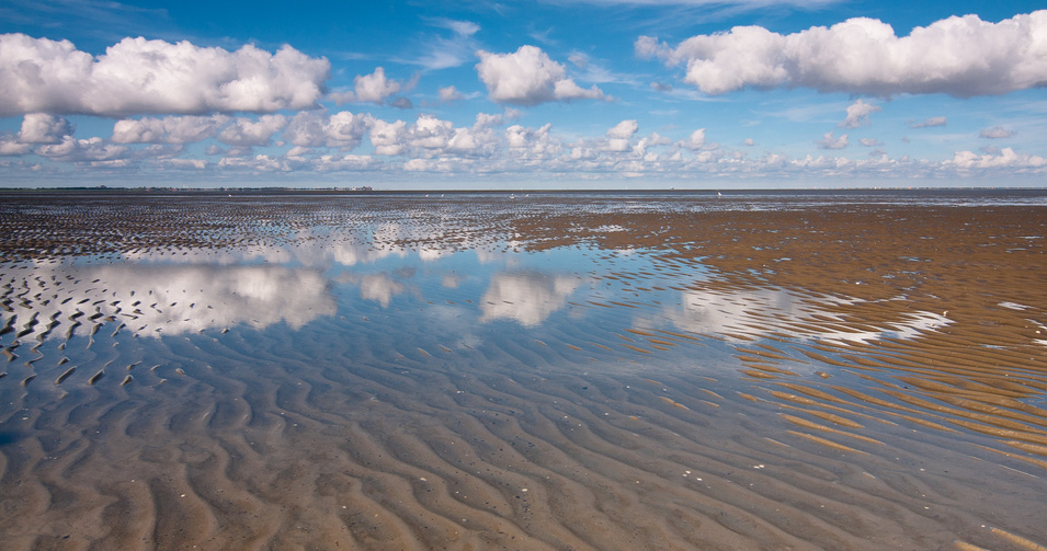 Norderney: Wattwürmer ahoi