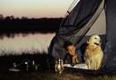 Zelten im Herbst – mit dem richtigen Schlafsack kein Problem